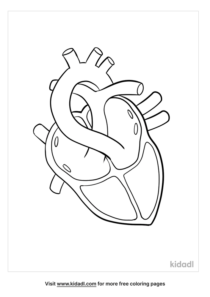 Anatomy Coloring Pages Free Human Body Coloring Pages Kidadl